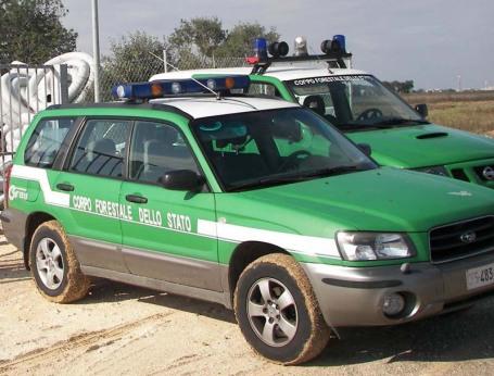 Le-indagini-del-Corpo-Forestale-456x346