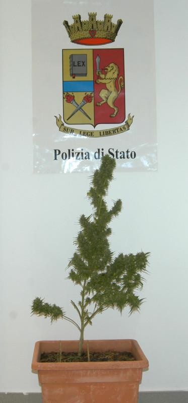 segnalati al Prefetto per detenzione di droga.doc