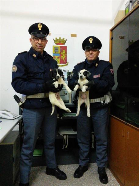 cuccioli salvati (Large)