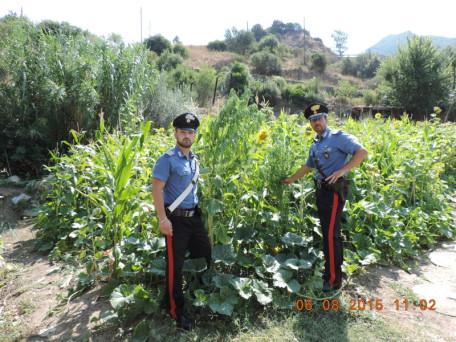 carabinieri cannabis