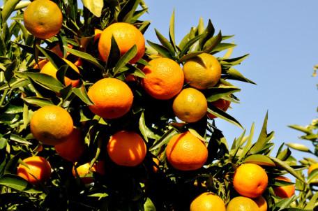 clementine-scarnato2