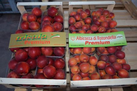albicocche premium