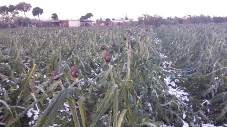 carciofi neve