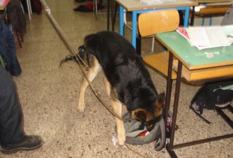 cane antidroga carabinieri scuola