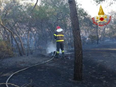 vigili del fuoco pineta