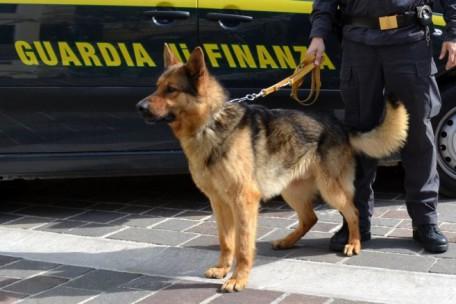 guardia di finanza cane