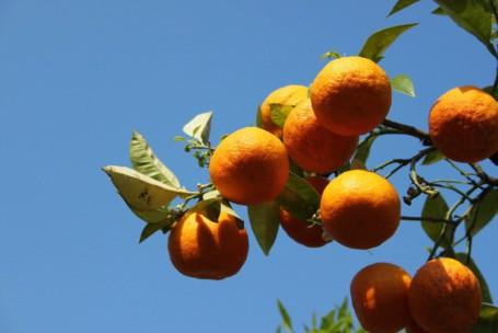 arance (2)