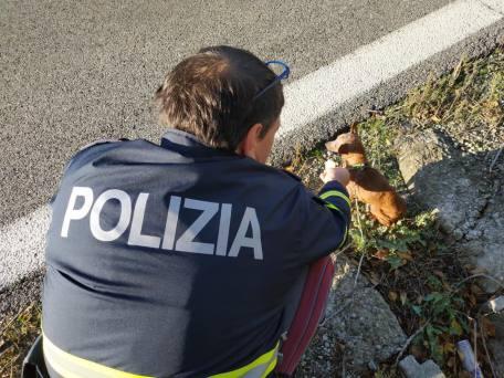 poliziotto salvataggio cane