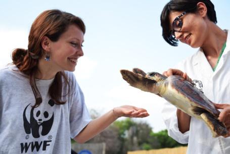 19_Caretta_Policoro WWF Rescue center