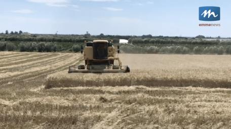 trebbiatura grano agricoltura