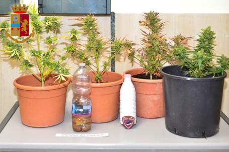 piantine di marijuana sequestrate