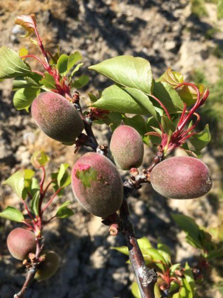 frutta danneggiataù